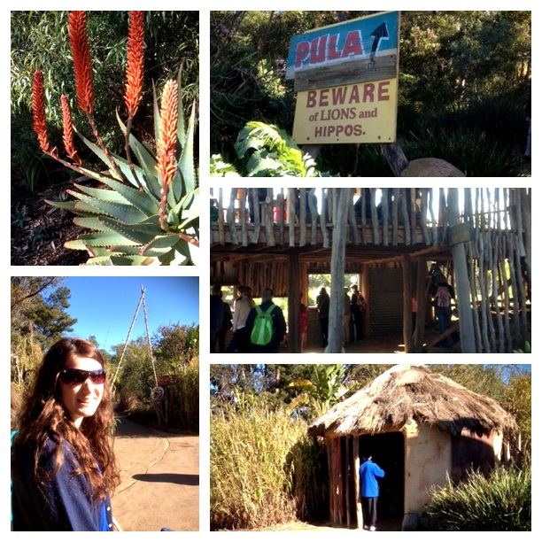 zoo montage1