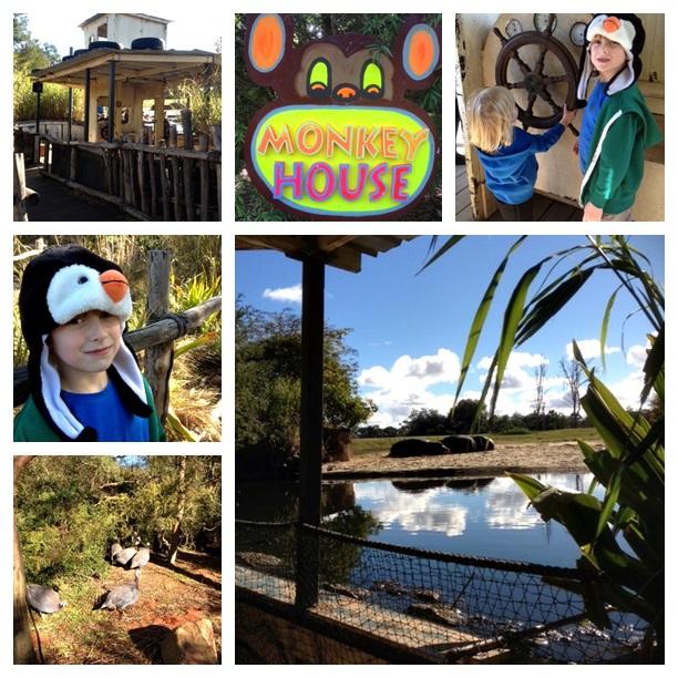 zoo montage2