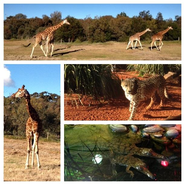 zoo montage3