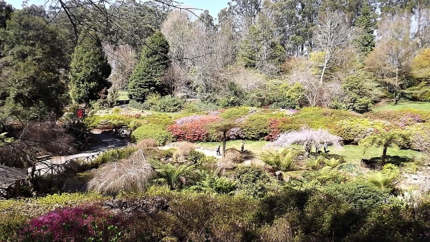 National Rhododendron Gardens4